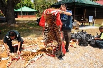 Trader pleads not guilty to keeping wildlife parts | Wildlife Trafficking: Who Does it? Allows it? | Scoop.it