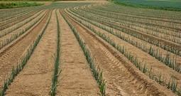 Lydia et Claude Bourguignon: il faut sauver notre sol! • Néoplanète | Pour une agriculture et une alimentation respectueuses des hommes et de l'environnement | Scoop.it