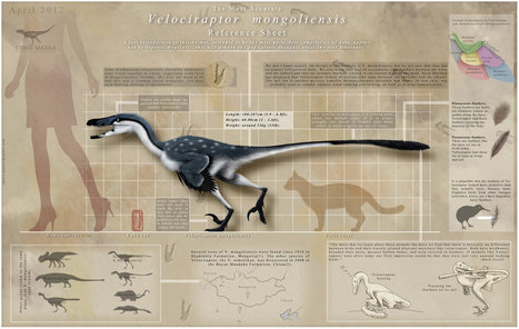 Velociraptor Mongoliensis Reference Guide [Infographic] | BestInfographics.co | The Best Infographics | Scoop.it