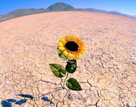 Resilienza: rialzarsi, più forti di prima - Psicologia | AulaUeb Filosofia | Scoop.it