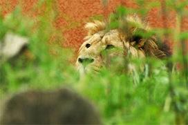 Les animaux en voie de disparition | espèces en voie de disparition | Scoop.it