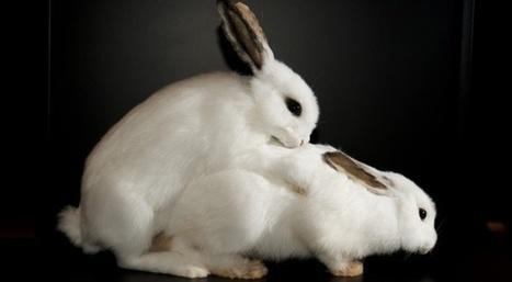 Comment compte-on les animaux sauvages? | Slate | Cabinet des curiosités | Scoop.it