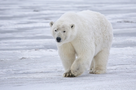 The climate petition to save the planet | Take action for a safer climate | Scoop.it