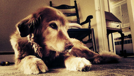 Why you should adopt an older pet   Life Simplified   Scoop.it