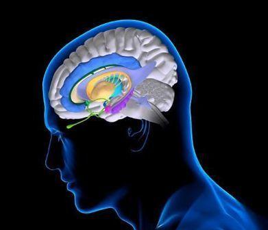 Associare artificialmente memorie non collegate | Neuroscienze applicate | Scoop.it