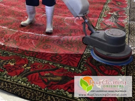 South Florida - Pet Odor Removal - Miami, Boca Raton, Fort Lauderdale | Carpet Cleaning | Scoop.it