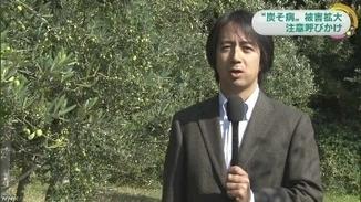 小豆島オリーブ 炭そ病注意を - NHK香川県のニュース | Olive News Japan | Scoop.it