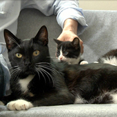 Mother Cat Loses Her Kittens, Adopts A Motherless Litter – Tails of ... | Cats Rule the World | Scoop.it