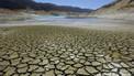Cambio climático: animales terrestres en peligro | Educacion, ecologia y TIC | Scoop.it