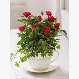Buy Fresh Indoor Plants from The Flower Box | The Flower Box | Scoop.it