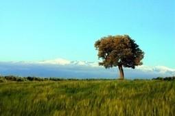 El cultivo ecológico II: El degradado del suelo | El Catador de Aceite | Ecología y Sostenibilidad | Scoop.it