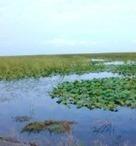 Zones humides : des pistes pour accroître l'efficience du plan d'action | ZONES_HUMIDES ET AGRICULTURE | Scoop.it
