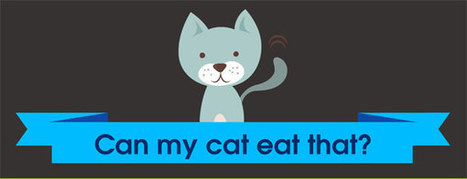 Can My Cat Eat That? (A Look At 40 Human Foods) [INFOGRAPHIC] | Infographics by Infographic Plaza | Scoop.it