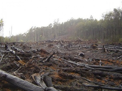 Vegetarianism saves the trees; meat eating leads to deforestation - Greener Ideal | Go Green and help the Planet! | Scoop.it