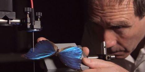 S'inspirer du papillon pour améliorer les panneaux solaires | responsabilité humaine | Scoop.it