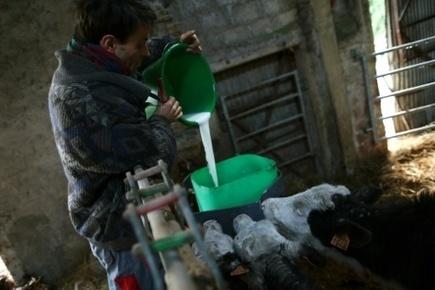Bruselas apoya limitar la producción de leche frente a la caída de precios | Producción Lechera | Scoop.it