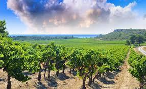 Qualité et diversité: les nouveaux habits du #Languedoc viticole. Un contre-modèle inspirant? | TRADCONSULTING 4 YOU | Scoop.it