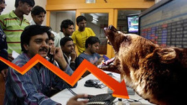 Sensex tanks 329 pts, Nifty50 falls below 8,100, Today Stock market closed RED | Free stock tips,Nifty future tips | Scoop.it