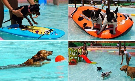 First swimming pool just for dogs opens in Spain | Easy Travelers | Scoop.it