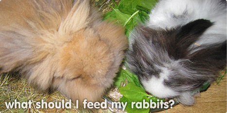What do rabbits eat? | What should I feed my bunny? | Carnivores, herbivores and omnivores | Scoop.it