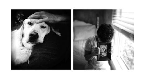 #Photographie : Benny Was A Good Boy. L'hommage émouvant d'une photographe à son chien disparu | Photographie, d'ailleurs! | Scoop.it