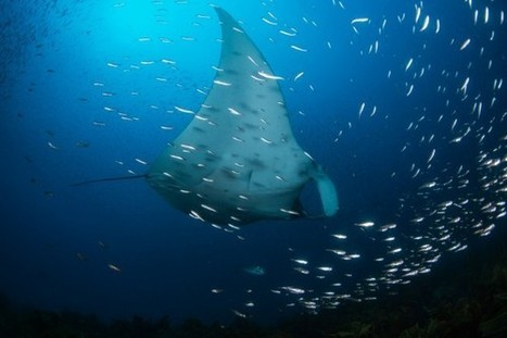 Diving Through Kelp With a Beautiful Giant | FOOD TECHNOLOGY  NEWS | Scoop.it