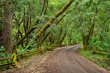 Road to Lazy Creek Winery, Anderson Valley | Mendocino County Living | Scoop.it