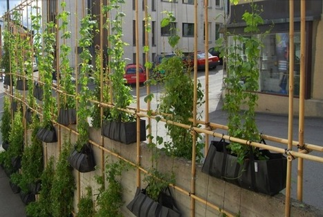 biomimicry KTH | Vertical Farm - Food Factory | Scoop.it