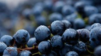 US wine exports hit record, China sales up 18% - Los Angeles Times   Wine business   Scoop.it