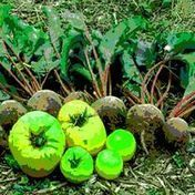 Jardins collectifs, jardins partagés, vers une autre nature en ville et un (...) - aua/Toulouse | Plus de légumes et moins de béton | Scoop.it