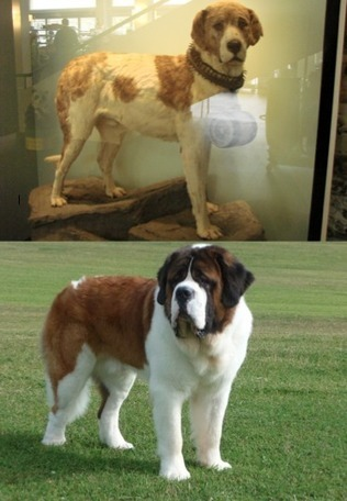 11 Breeds That Look Totally Different From Their Ancestors | Dog Lovers | Scoop.it