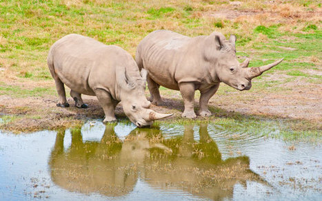 Safari holidays: on the front line of rhino protection - Telegraph | tices | Scoop.it