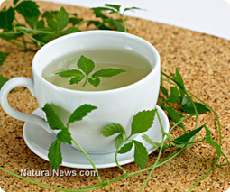 Five amazing herbal teas and the conditions they can help treat | News You Can Use - NO PINKSLIME | Scoop.it
