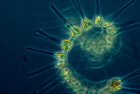 Plankton and you: The science of how we're all connected to climate | Développement durable et efficacité énergétique | Scoop.it