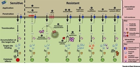 Trends and Challenges in Pesticide Resistance Detection | Molecular basis of fungicide resistance | Scoop.it