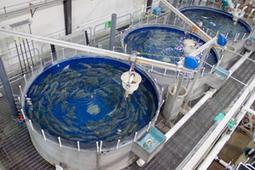 Freshwater Institute | Mina Tani Semesta | Scoop.it