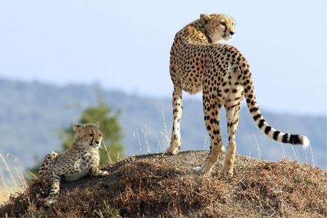 Holiday in Kruger National Park   Top Holiday Destinations in the World   Scoop.it
