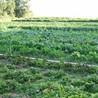 Green Forward - Environment-World