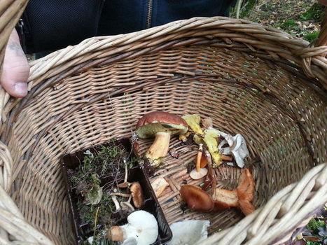 En Alsace, la cueillette de champignons bat son plein | Alsace Actu | Scoop.it