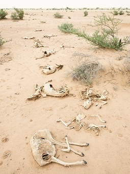 In Somaliland, climate change is now a life-or-death challenge | Sustain Our Earth | Scoop.it