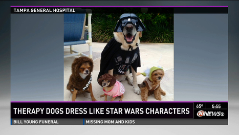 Therapy Dogs. Dressed As 'Star Wars' Characters. To Raise Money For Kids. | All Geeks | Scoop.it