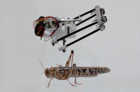 Demain un robot criquet vous sauvera peut-être la vie | Une nouvelle civilisation de Robots | Scoop.it