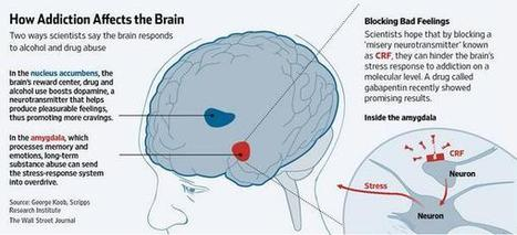 Twitter / WSJGraphics: How addiction affects the brain ... | wellness | Scoop.it