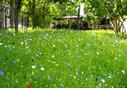 Une prairie fleurie à la Gare de Reuilly! | Agriculture urbaine, architecture et urbanisme durable | Scoop.it