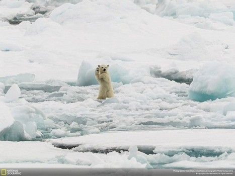 7 Breathtaking nature entries for the National Geographic photo contest 2014 | Inspirational Photography to DHP | Scoop.it