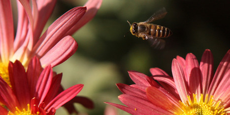 U.S. Retailers Move To Help Honeybees Escape Pesticides | Vertical Farm - Food Factory | Scoop.it