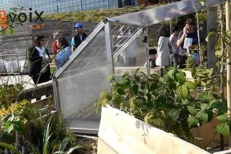 The Living Roof, deux mois après | Innovation sociale | Scoop.it