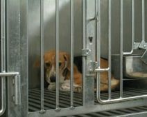 STOP ANIMAL EXPERIMENTATION! - The Petition Site | Animal Welfare | Scoop.it