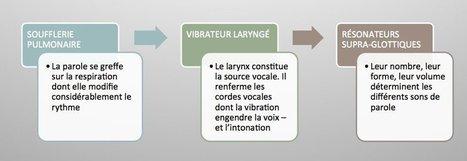La voix parlée - Tackk | FLE phonétique | Scoop.it