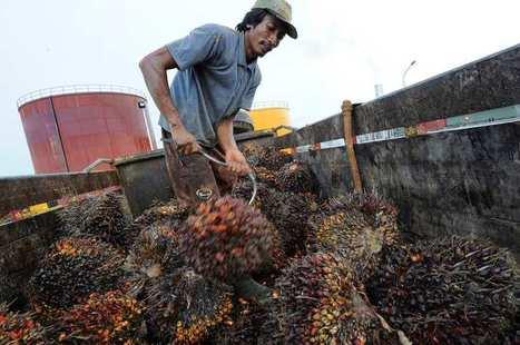 Pourquoi la France hésite à taxer davantage l'huile de palme | PRODUITS AGRICOLES ET MARCHES - AGRICULTURAL PRODUCTS AND MARKETS | Scoop.it
